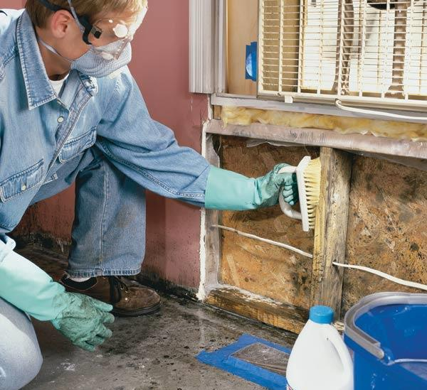 8 Tips to Prevent Mold under Water Damaged Carpets ...